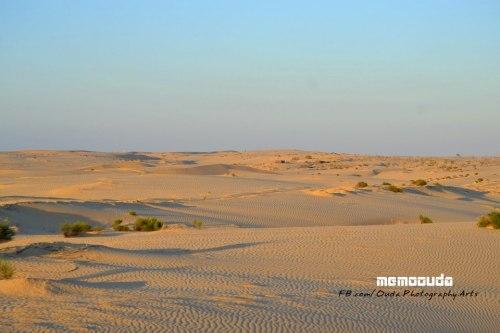 منطقة العجرا بصحراء وادي العمرو الغنية بالمياه الجوفية، الصفراء في الناحية المصرية، المقابلة للخضار في الأرض المحتلة